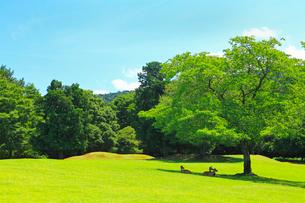 緑の奈良公園 の写真素材 [FYI02080377]