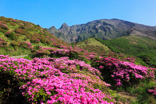 仙酔峡のミヤマキリシマと阿蘇山の写真素材 [FYI02080402]