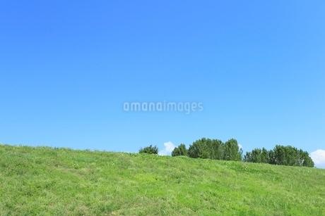 土手の緑樹と青空の写真素材 [FYI02080464]