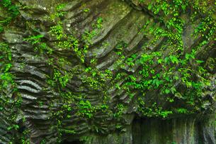 高千穂峡 柱状節理の断崖の写真素材 [FYI02080524]