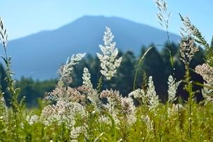 朝露の野草と男体山の写真素材 [FYI02080540]