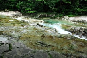 面河渓の流れの写真素材 [FYI02080599]