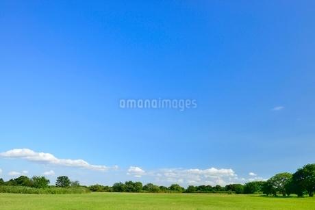 緑の草原と青空の写真素材 [FYI02080668]