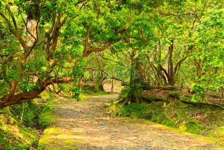 ささやきの小径 奈良公園 の写真素材 [FYI02080706]