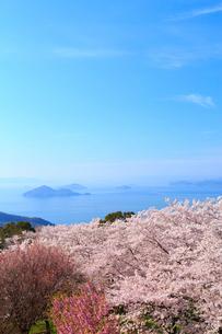 紫雲出山のサクラと瀬戸内海の写真素材 [FYI02080730]