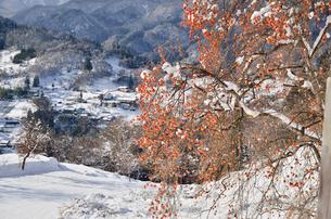 柿と雪の里山の写真素材 [FYI02080776]