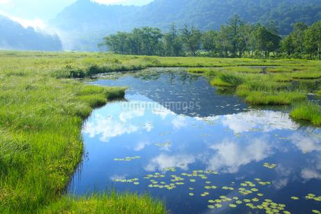 尾瀬ケ原 夏の池塘の写真素材 [FYI02080779]