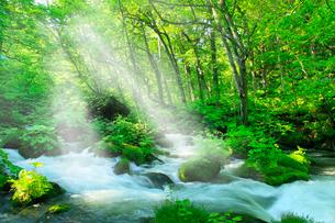 新緑の奥入瀬渓流と光芒の写真素材 [FYI02080824]