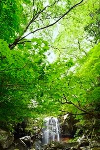 赤滝と新緑の写真素材 [FYI02080872]
