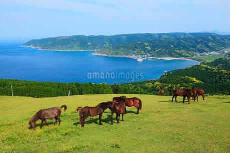 都井岬の岬馬の写真素材 [FYI02080874]