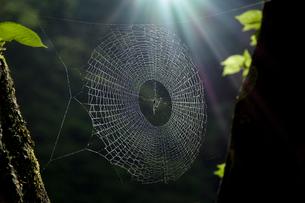 クモの巣の写真素材 [FYI02080875]