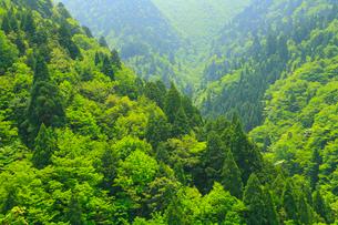 新緑の山肌の写真素材 [FYI02080888]