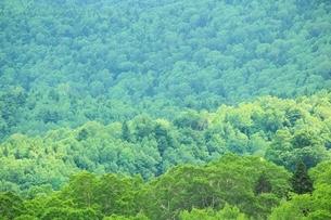 新緑の山肌の写真素材 [FYI02080918]
