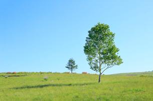 緑樹とレンゲツツジの写真素材 [FYI02080988]