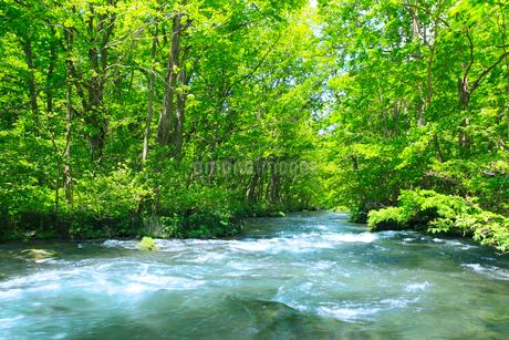新緑の奥入瀬渓流の写真素材 [FYI02081115]