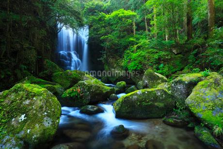 桑の木の滝とイワツツジの写真素材 [FYI02081126]