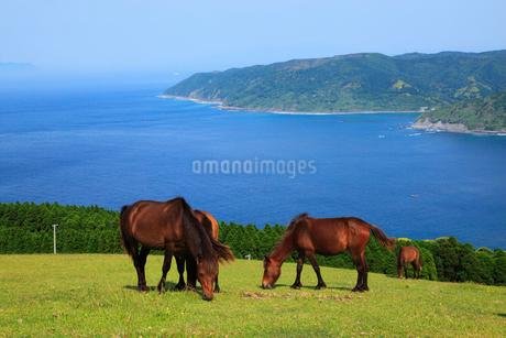 都井岬の岬馬の写真素材 [FYI02081132]