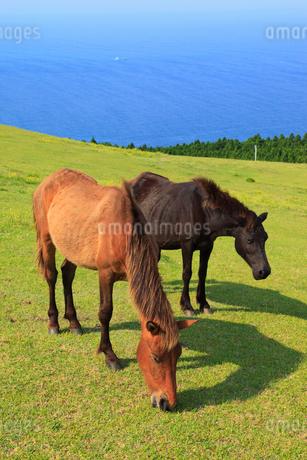 都井岬の岬馬の写真素材 [FYI02081149]