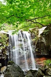 赤滝と新緑の写真素材 [FYI02081198]