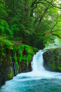 菊池渓谷 黎明の滝の写真素材 [FYI02081319]