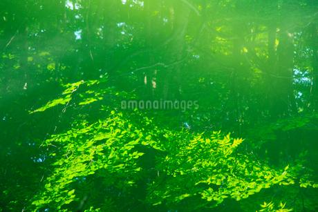 新緑の反映する水面の写真素材 [FYI02081385]