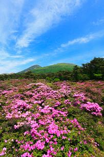 えびの高原 つつじヶ丘のミヤマキリシマと韓国岳の写真素材 [FYI02081499]