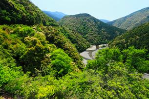 果無山脈 ツブラジイの森と新緑の写真素材 [FYI02081500]