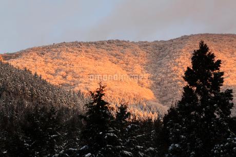 高見山の樹氷と朝焼けの写真素材 [FYI02081651]