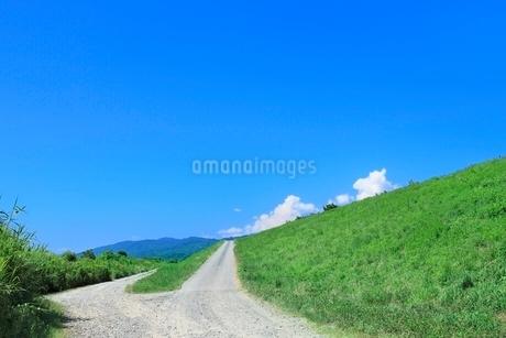緑の土手と道の写真素材 [FYI02081677]