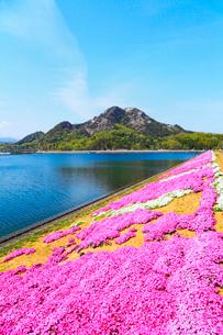 シバザクラと山大寺池 獄山の写真素材 [FYI02081740]