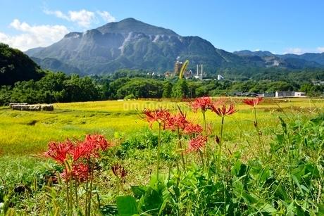ヒガンバナ咲く寺坂棚田と武甲山の写真素材 [FYI02081873]