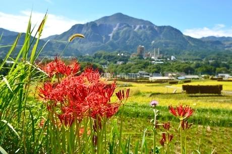 ヒガンバナ咲く寺坂棚田と武甲山の写真素材 [FYI02081894]