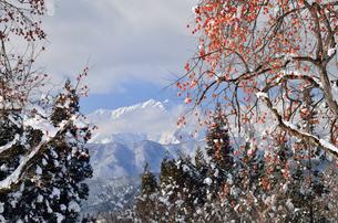 柿と雪の写真素材 [FYI02081953]