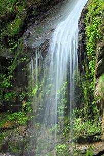 新緑と琵琶の滝の写真素材 [FYI02082034]