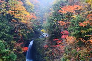 高野大滝の紅葉の写真素材 [FYI02082037]