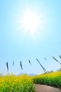 ナノハナ畑と鯉のぼり 太陽の写真素材 [FYI02082177]