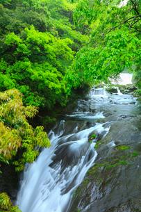 菊池渓谷 掛幕の滝の写真素材 [FYI02082197]
