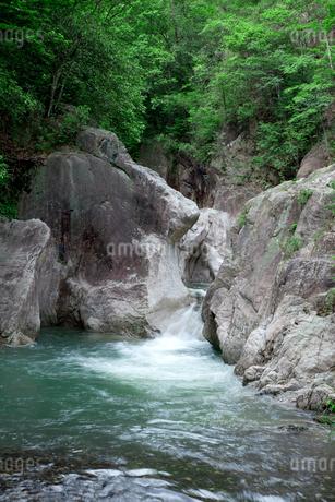 新緑の柏原渓谷の写真素材 [FYI02082276]