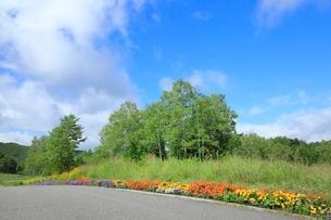 沿道の花壇とシラカバの写真素材 [FYI02082327]