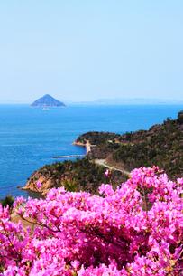 瀬戸内海 直島のツツジの花と大槌島の写真素材 [FYI02082349]