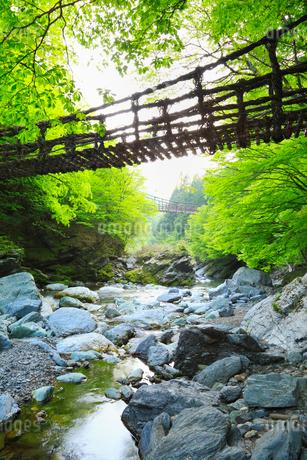 新緑と奥祖谷かずら橋の写真素材 [FYI02082363]