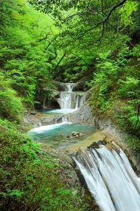 新緑の西沢渓谷・七ツ釜五段の滝の写真素材 [FYI02082467]