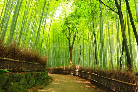 嵯峨野の竹林と道の写真素材 [FYI02082471]