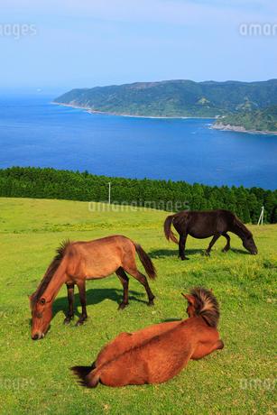 都井岬の岬馬の写真素材 [FYI02082478]