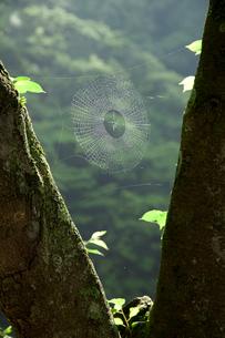 クモの巣の写真素材 [FYI02082572]