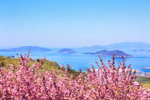 ボタンザクラと瀬戸内海の写真素材 [FYI02082880]