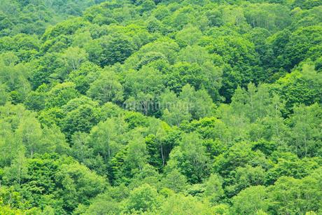 新緑と渓谷の写真素材 [FYI02082980]