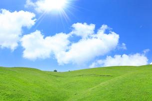 草原と緑樹に太陽光の写真素材 [FYI02082999]