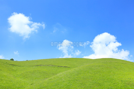 草原と緑樹の写真素材 [FYI02083001]