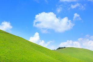 草原と緑樹の写真素材 [FYI02083006]